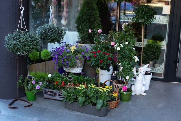 Grüne pflanzen in töpfen auf dem tisch im straßenblumenladen. kaufen sie zimmerpflanzen und topfblumen.