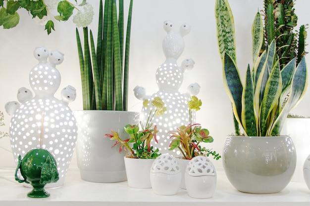 Grüne pflanzen in weißen töpfen schließen