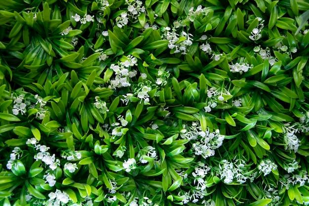 Grüne pflanzen schmücken an der wand. grüne blätter auf wandhintergrund.