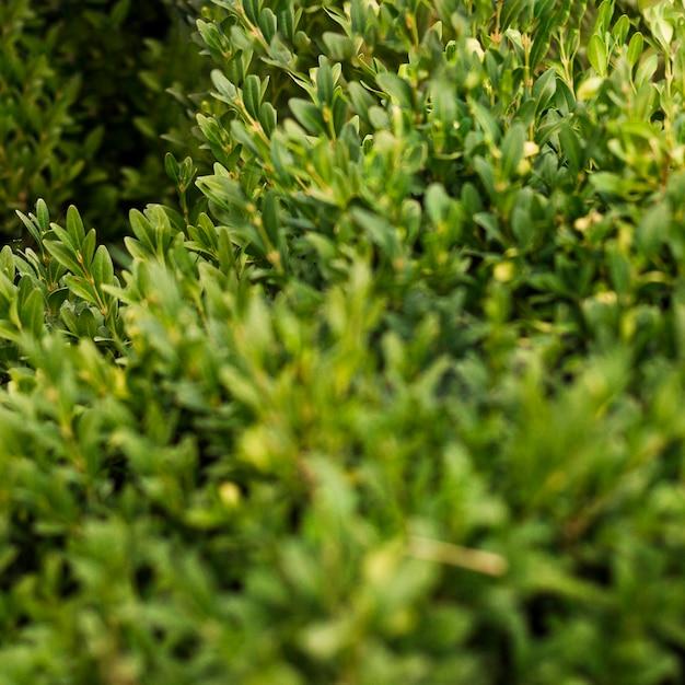 Grüne pflanzenblätter der nahaufnahme