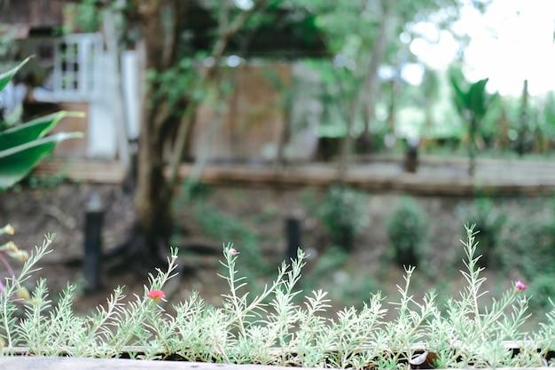 Grüne pflanzenblätter im blumentopf, der auf terrassenbalkon verziert