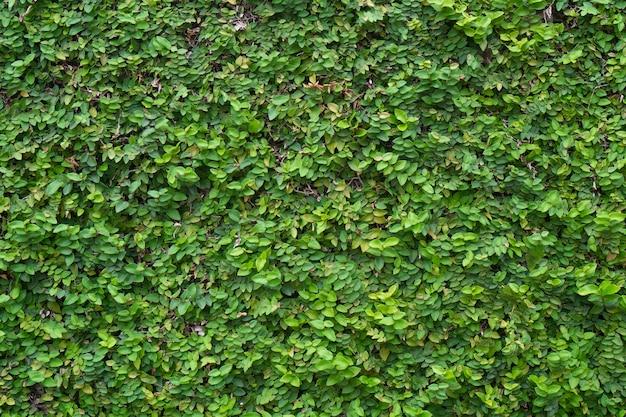 Grüne pflanzenwand