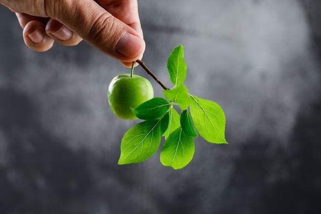 Grüne pflaume in der hand mit zweig auf dunkler wand, seitenansicht.