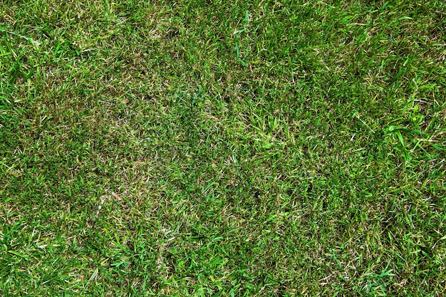 Grüne rasentextur mit trockenem gras