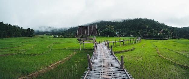 Grüne reisfelder ansichten von reisfeldern, reisfeldern und bergen
