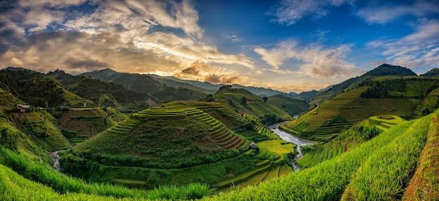 Grüne reisfelder auf terrassiert in mu cang chai, vietnam