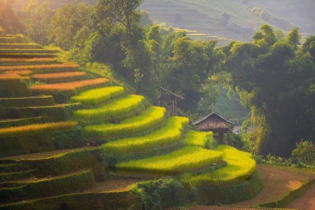 Grüne reisfelder auf terrassiertem in mu cang chai, vietnam-reisfeld