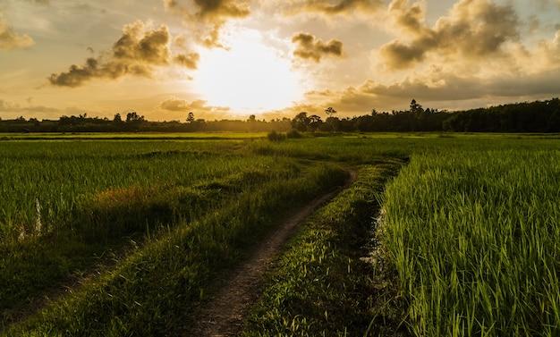 Grüne reisfelder und sonnenuntergangshimmel in der abendlandschaft