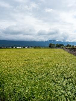 Grüne reisfelder, weiße wolken, berge in hualien, taiwan.