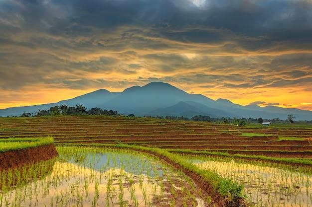 Grüne reisterrassen im dorf mit bergen und sonnenaufgang am morgen in indonesien