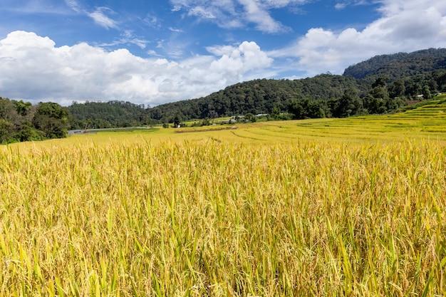 Grüne reisterrassen in mae klang luang, provinz chiang mai, thailand