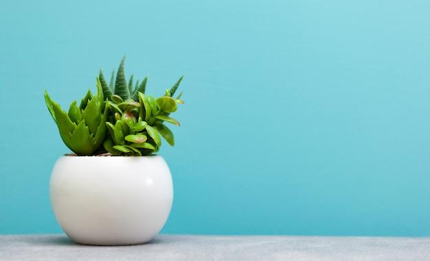 Grüne saftige pflanzen im topf der weißen blume.