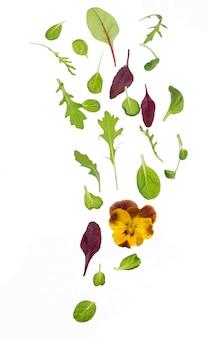 Grüne salat-salatblätter lokalisiert auf dem weiß
