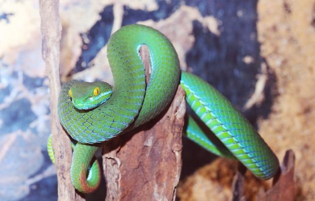 Grüne schlange am zweig