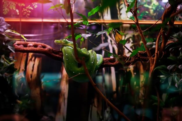 Grüne schlange auf dem ast
