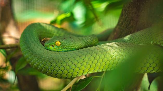 Grüne schlange, die auf baum kriecht