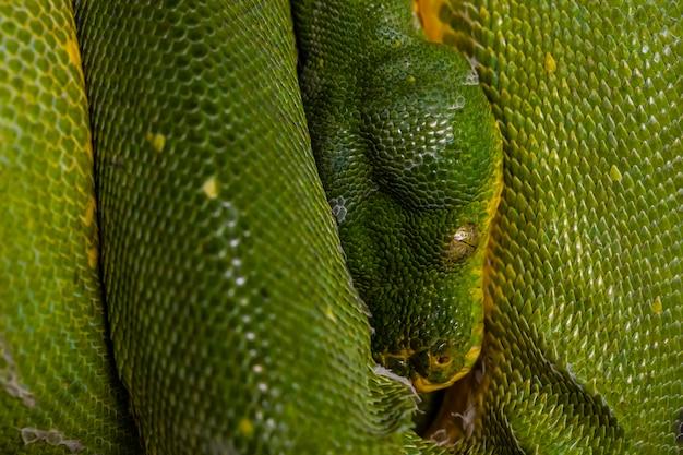 Grüne schlange in der großaufnahme zum auge