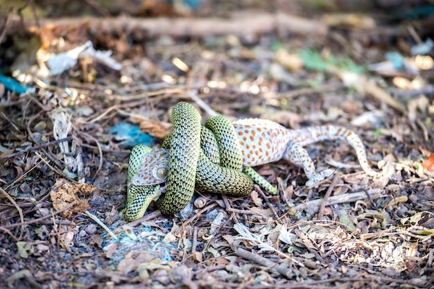 Grüne schlange töten gecko mit essen