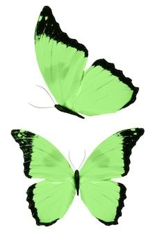 Grüne schmetterlinge isoliert auf weißem hintergrund. tropische motten. insekten für das design. aquarellfarben