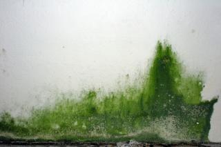 Grüne schmiere an der wand