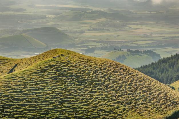 Grüne smaragdhügel von insel san miguel. azoren. portugal