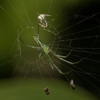 Grüne spinne auf dem spinnennetz