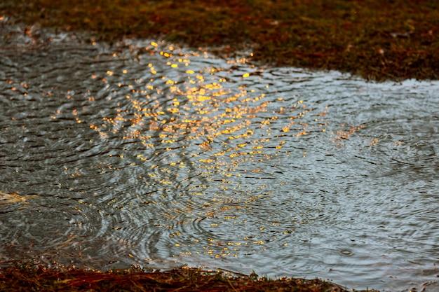 Grüne sprösslinge im regen und in gelben tönen mit sonnenstrahlen