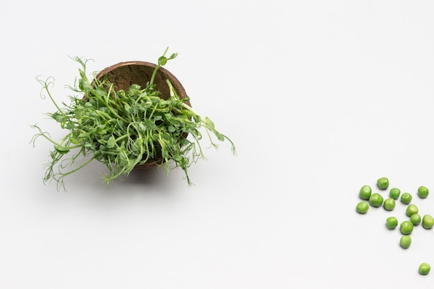 Grüne sprossen von erbsen in der schachtel. grüne erbsen auf dem tisch. grauer hintergrund. flach liegen. speicherplatz kopieren