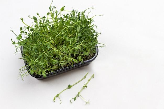 Grüne sprossen von erbsen in der schachtel. zwei grüne sprossen auf dem tisch. weißer hintergrund. flach liegen. speicherplatz kopieren