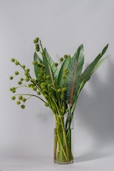Grüne strelitzia-blätter und europäisches schilf oder sparganium emersum in glasvase an grauer wand
