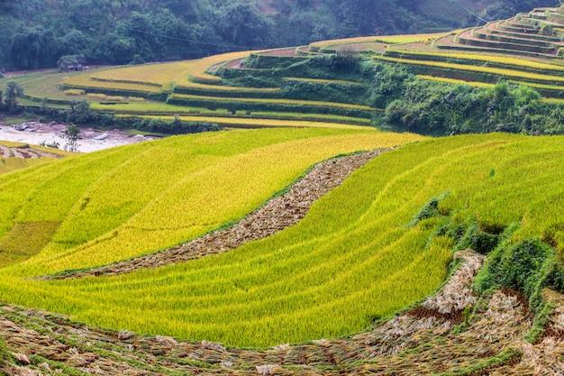Grüne terassenförmig angelegte reisfelder bei mu cang chai