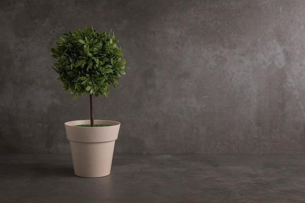 Grüne topfpflanze, bäume im topf auf dem tisch
