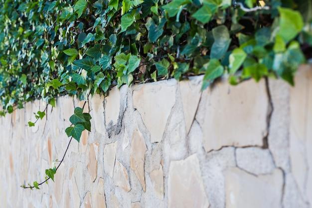 Grüne topfpflanzen im schönen topf im freien