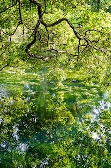 Grüne tropische bäume auf einem see mit reflexion, tansania, ostafrika