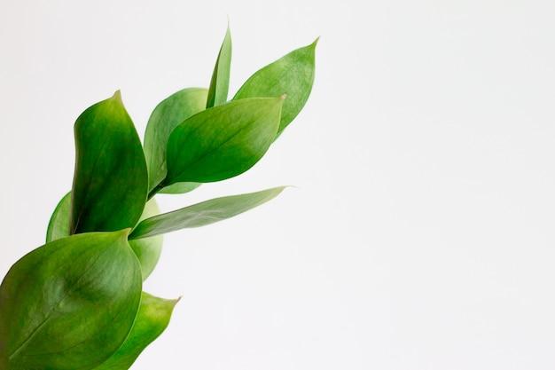 Grüne tropische blätter auf weiß. stilvolle modische minimale natur