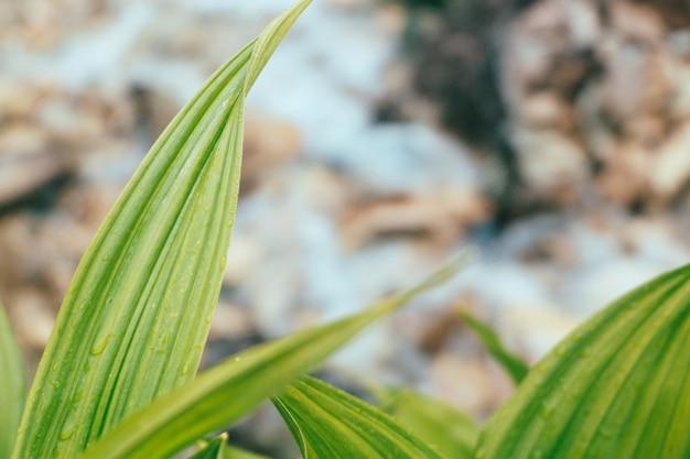 Grüne tropische blätter mit wassertropfen auf gebirgsbachhintergrund