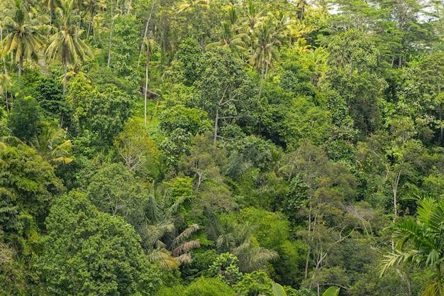 Grüne tropische blätter wachsen im dschungel, sommersaison auf bali-hintergrund in exotischen tönen to