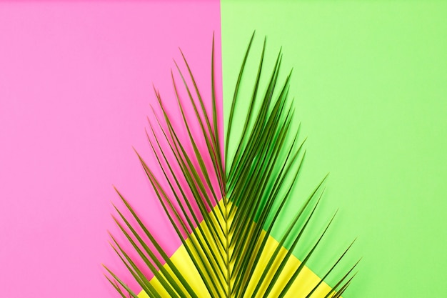 Grüne tropische blätterpalme auf farbhintergrund