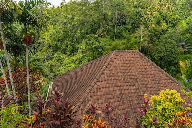 Grüne tropische pflanzen wachsen in exotischen dschungeln, nahaufnahme des daches im vordergrund