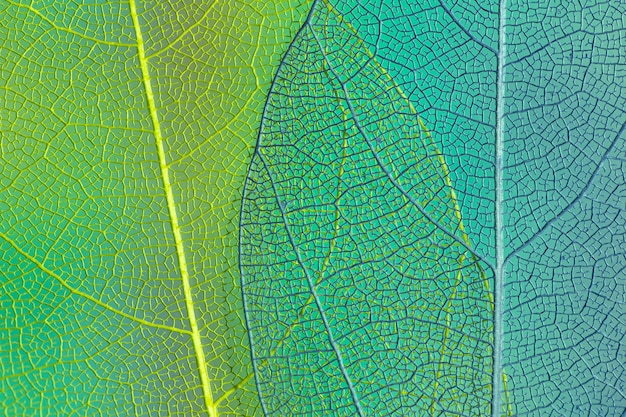 Grüne und blaue transparente blätter