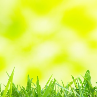 Grüne und gelbe abstrakte lichtpunkte können für den hintergrund verwendet werden