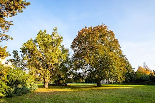 Grüne und gelbe bäume im frühherbstpark.