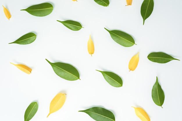 Grüne und gelbe blätterzusammensetzung auf einem weißen tisch, draufsicht