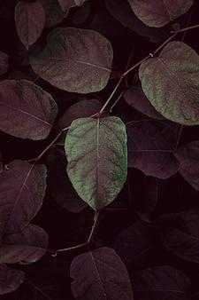 Grüne und rote pflanzenblätter in den herbstfarben der herbstsaison