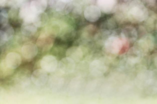 Grüne unschärfe, unscharf hintergrund.
