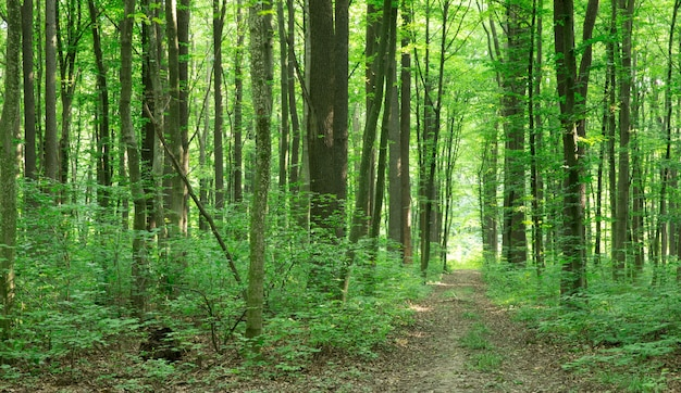Grüne waldbäume. natur grün holz sonnenlicht hintergründe