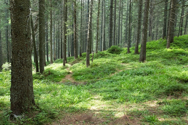 Grüne waldbäume. naturgrünwald