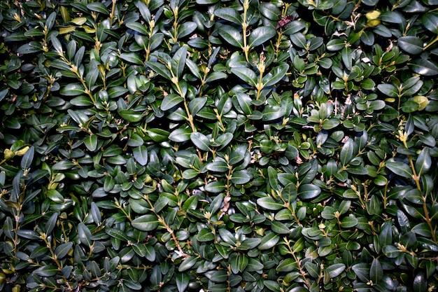 Grüne wand textur