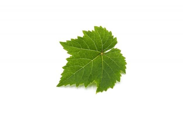 Grüne weinblätter isoliert