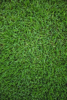 Grüne wiese hintergrund